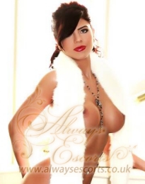 All services high class educated escort Paddington W2